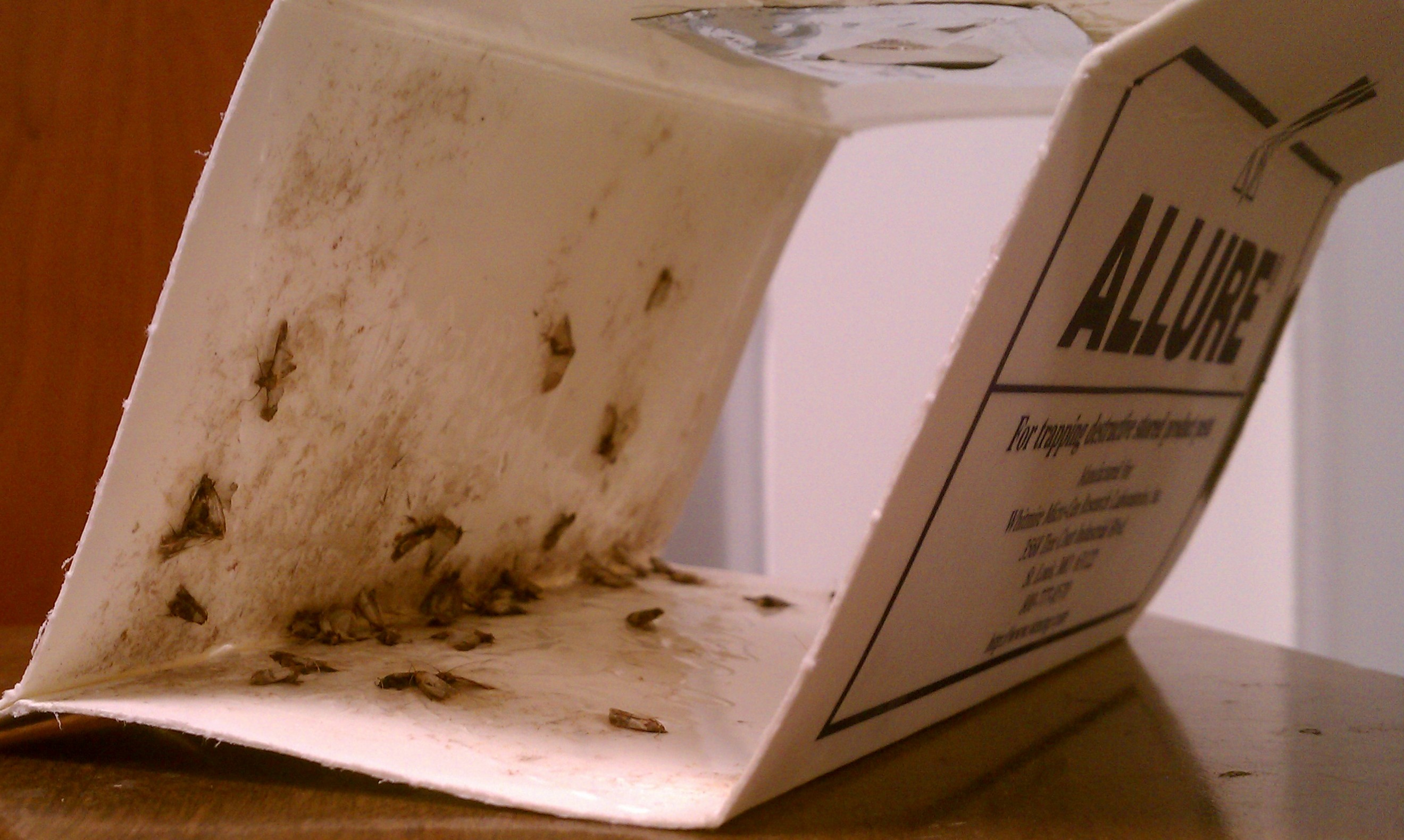how to make a carpet beetle trap